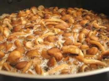 Малосольные грибы: рецепт из глубины веков
